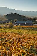 Belle Fiore, Ashland, Southern Oregon