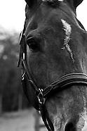 Nicole Mills at Belton International Horse Trials Friday 2013