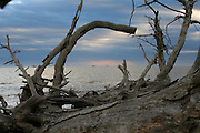 A pile of dead driftwood trees on a deserted Jekyll Island Beach outlining distant shrimp boats and a gloomy morning sunrise.