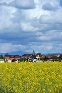 28/04/14 - PLAINE DE LA LIMAGNE - PUY DE DOME - FRANCE - Champs de colza en fleurs - Photo Jerome CHABANNE
