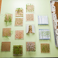 Three different germination tests: Roll Towell, Blotter and Warm Sand at the Ohio Seed Improvement Association in Dublin, Ohio.(Photos by Jodi Miller)