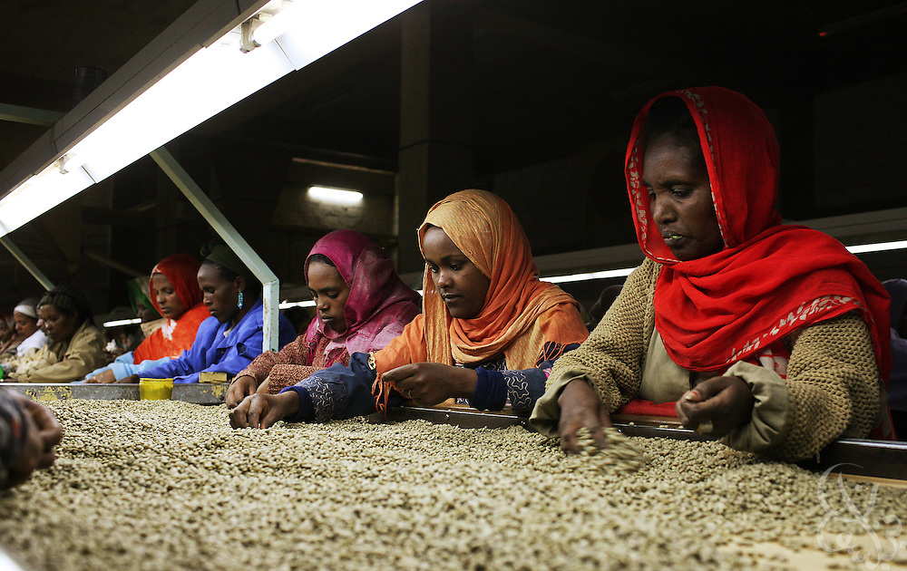starbucks vs ethiopia Starbucks, the giant us coffee chain, has used its muscle to block an attempt by ethiopia's farmers to copyright their most famous coffee bean types, denying them potential earnings of up to £47m a year, said oxfam.