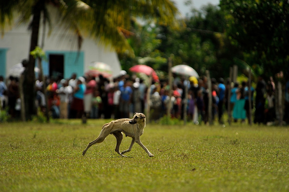 A dog runs across a field as two UH-60 Black Hawks carrying, medical supplies, lands in the village of Wawina, Honduras. — © /
