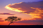 Image of a dramatic sunset at the Masai Mara National Reserve in Kenya, Africa