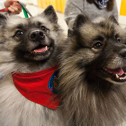 Therapy Dogs Fall 2016