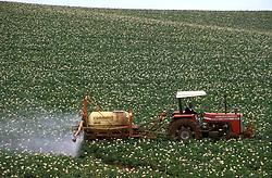 Rio Grande do Sul, Brasil. 01/1997..Maquina agricola aplicando agrotoxico em plantacao de batatas. Adubacao mecanica./ Tractor applying pesticides in potato plantation..Foto ©Adri Felden/Argosfoto