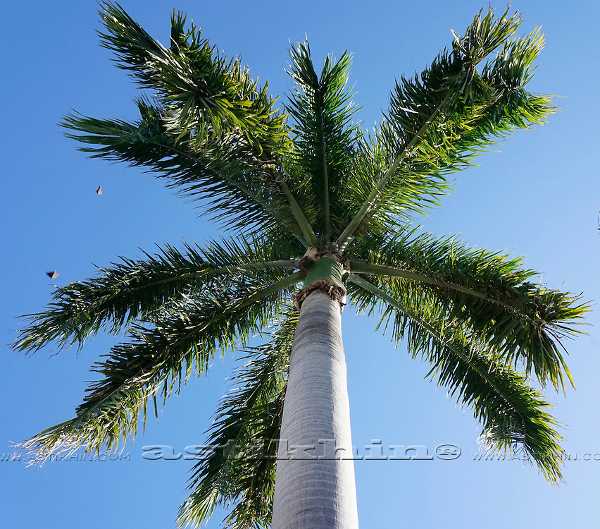 Palm tree in front of blue sky, Florida.