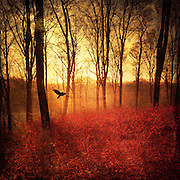 sunrise in a autumnly forest with a bird ascending - texturized photograph<br /> Licenses: http://www.trevillion.com/search/preview/trevillion/0_00201088.html