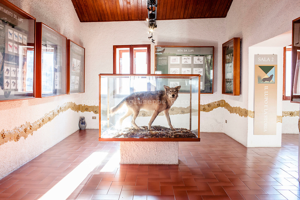 16 February 2017, Civitella Alfedana - Apennine Wolf Museum. A path dedicated to biology, ethology, history and legends tied a this elusive predator and its relationship with man.