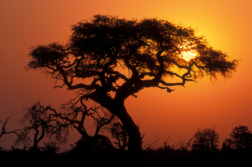 Botswana, Chobe National Park, Setting sun silhouettes trees near water hole in Savuti Marsh at sunset