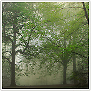 Park in early morning mist