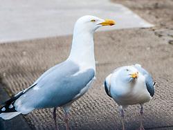 Seagulls attack..