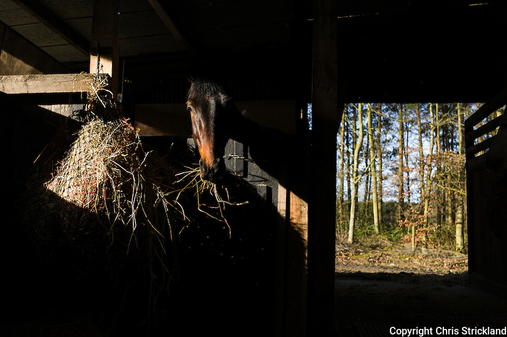 A horse enjoys munching on hay on a gorgeous spring morning in an eventing yard in the Scottish Borders.