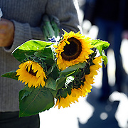 SHOT 10/23/2007 - A marketgoer carries a bundle of sunflowers through the farmer's market in San Francisco, Ca. The City and County of San Francisco is the fourth most populous city in California and the fourteenth-most populous in the United States. San Francisco is a popular international tourist destination renowned for its steep rolling hills, an eclectic mix of Victorian and modern architecture, its large LGBT (lesbian, gay, bisexual, and transgender) population, and its chilly summer fog and mild winters. Famous landmarks include Union Square, Pacific Heights, Russian Hill, Fisherman's Wharf, North Beach and Chinatown..(Photo by Marc Piscotty © 2007)