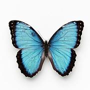 2014Butterflies