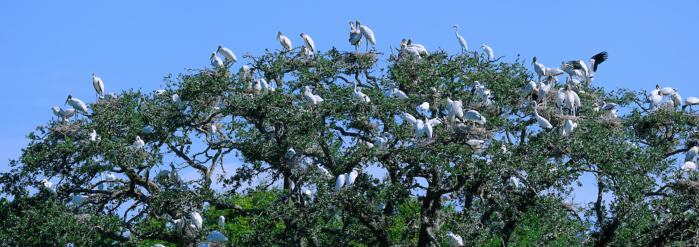 Birds on Tree, Alligator Farm, Zoological Park, St. Augustine, Florida, USA