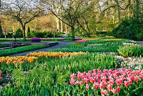 Tulip garden netherlands