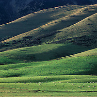 Pastures near Te Anau, South Island, New Zealand