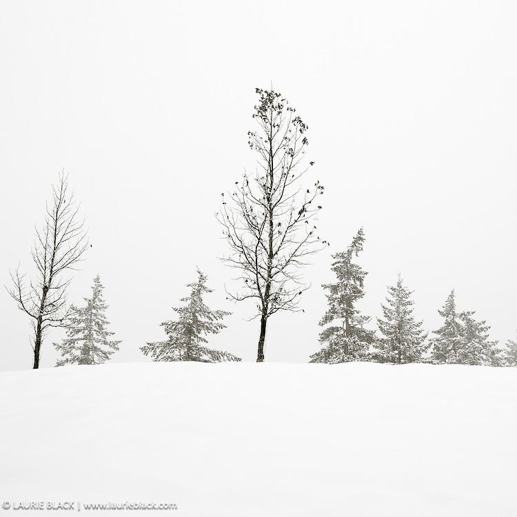 B&W winter landscape fine art photo 9