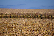 Midwest Corn Crop Fall View