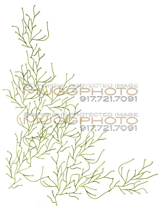 vitra algae room divider on white