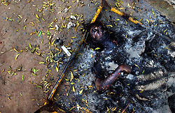 An elderly Muslim woman's body whose throat was slashed and then set on fire lies outside of her home March 2, 2002 in Ahmedabad, India. Her home sat next door to a local police station but she and an untold number of others were brutally killed by angry mobs on a spree of vengeance. Troops arrived in India's riot-torn western state of Gujarat but were unable to quell the religious violence that brought back stark memories of Partition in 1947.