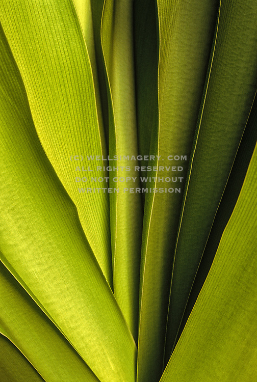Image of an agave plant detail in Hawaii, American West
