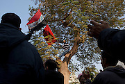 A Protestor with a national flag in a tree  outside the Parliament building in Cairo, Egypt November 26,2011.  (Photo by Heidi Levine/Sipa Press).