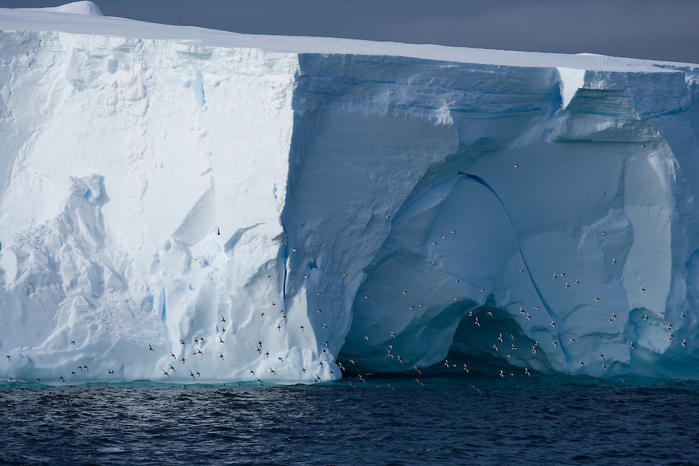 February 18th 2007. Southern Ocean. Birds fly past an iceberg in the Ross Sea.