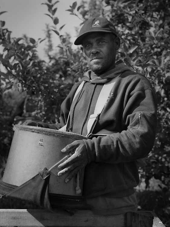 Apple pickers on these orchards in New York State are primarily Jamaican and Mexican. They stay during harvest season in trailers on the farmers property.