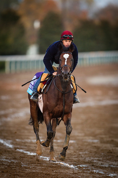October 29, 2015:   Hit It a Bomb, trained by Aidan P. O'Brien and owned by Mrs. Evelyn M. Stockwell, exercises in preparation for the Breeders' Cup Juvenile Turf at Keeneland Race Track in Lexington, Kentucky. Alex Evers/ESW/CSM