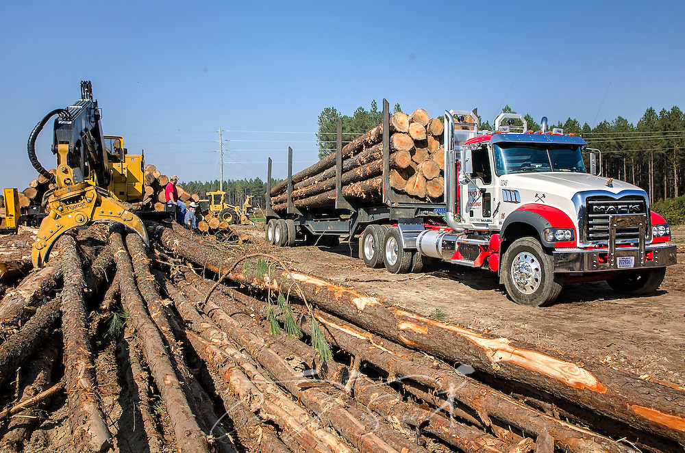A Mack Granite is loaded with loblolly pine, Nov. 16, 2016,  at Tracy's Logging in Steadham, S.C. The load will go to a Georgia-Pacific plant. (Photo by Carmen K. Sisson)