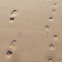 Footprints left behind in the sand by a man and his dog on Canada's Prince Edward Island