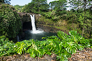 Rainbow Falls or Waianuenue (80 feet tall), Wailuku River State Park, Hilo, Hawaii, USA. The waterfall viewing areas are surrounded by nonnative Monstera deliciosa (from Mexico & Central America) and wild ginger.