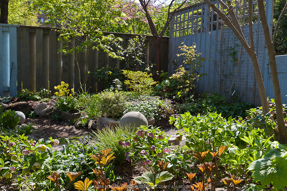 An urban woodland garden – Woodland Garden Plants