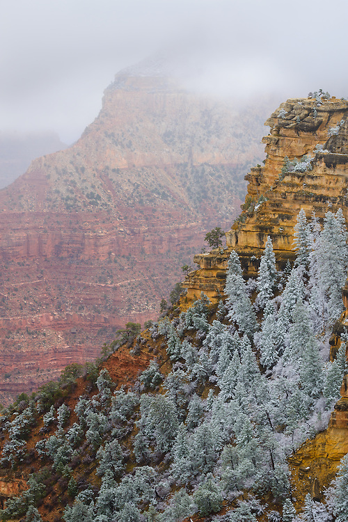 Trees covered in snow at the Grand Canyon. From the South Rim near Mather Point.