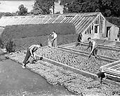 1958 Edmundsbury Farm