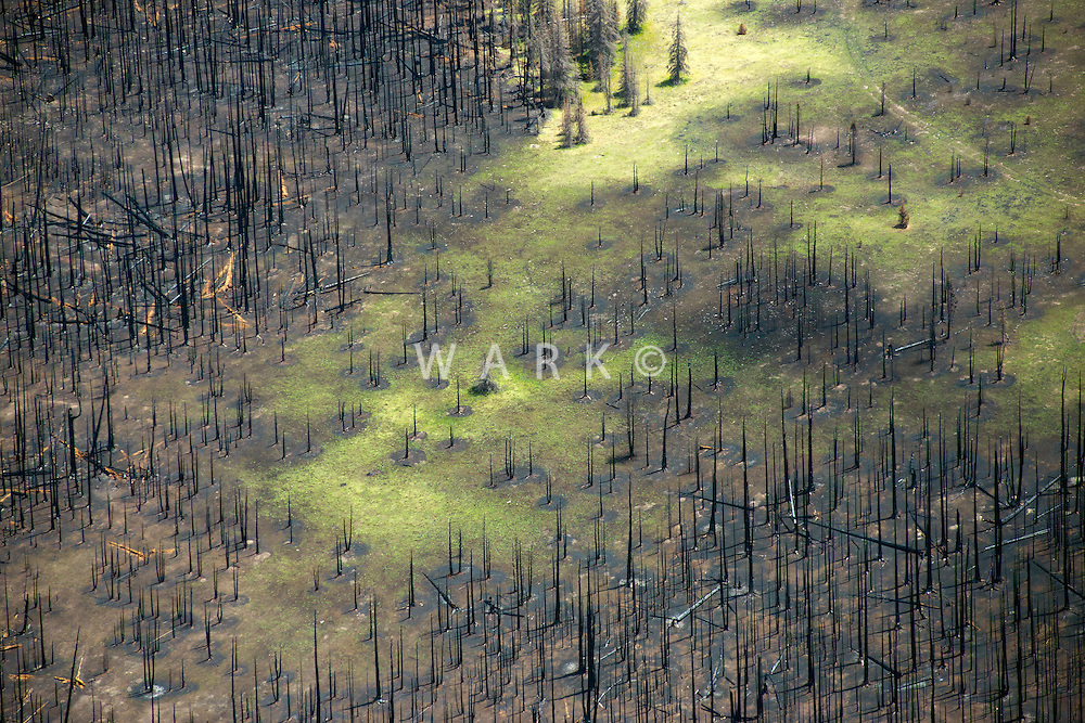 Forest fire burn scar. West Fork Complex fire, Mineral County, Colorado.  July 2013.  80403