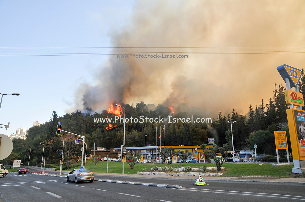 Wild fire in the city of Haifa, Israel in November 2016