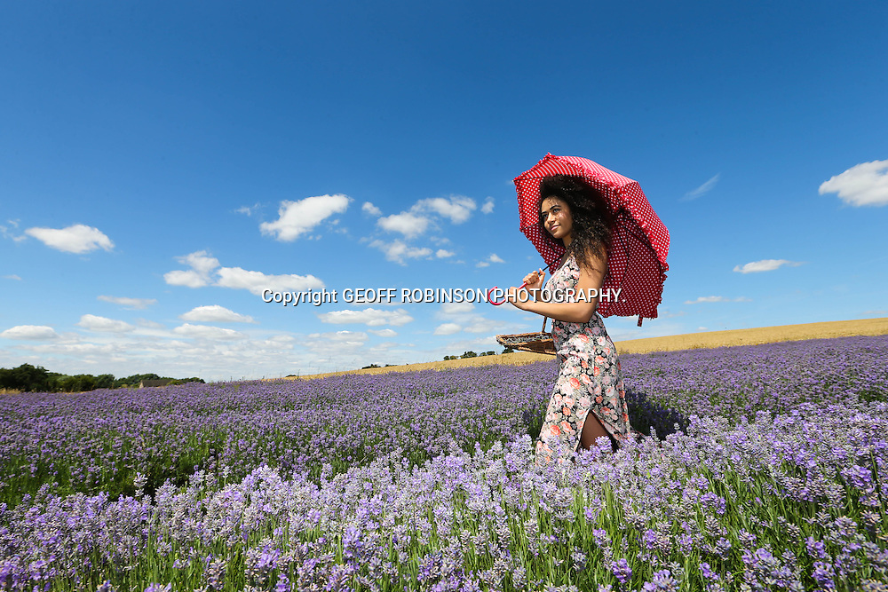 PIC BY GEOFF ROBINSON PHOTOGRAPHY 07976 880732.<br /> <br /> PIC SHOWS BETHANY JOESEPH,20, MAKING THE MOST OF THE HOT WEATHER WHILST PICKING LAVENDER AT CADWELL FARM IN HITCHIN,HERTS,ON MONDAY JULY 14TH.THE HOT SPELL IS EXPECTED TO LAST ALL WEEK WITH ST SWITHINS DAY BEING MAINLY DRY.<br />  <br /> <br /> Brits can look forward to 40 days of sun this summer as St Swithin's Day tomorrow (Tues) is forecast to be warm and dry with temperatures up to 25C.<br /> <br /> According to legend, if it rains on July 15, the feast day of Saxon bishop Saint Swithin, it will rain continuously for 40 days, but if it does not rain then 40 days of good weather will be enjoyed.<br /> <br /> Many are now hoping the legend will come true as most of the country is expected to enjoy a dry and fine St Swithin's Day, with temperatures increasing to a possible 31C by the weekend.<br /> <br /> Forecasters at the Met Office say there is &quot;no scientific basis&quot; to St Swithin's Day, but the South East could hang onto the warm and sunny weather until the end of the week.<br /> <br /> &quot;There is no scientific evidence that supports St Swithin's Day, which is a shame as for most people it is looking like a nice day with prolonged sunshine,&quot; said Nicola Maxey of the Met Office.<br /> <br /> The recent spell of warm weather and sunshine has helped the lavender to bloom at Cadwell Farm in Hitchin, Herts.<br /> <br /> SEE COPY CATCHLINE  Sun for St Swithin's Day