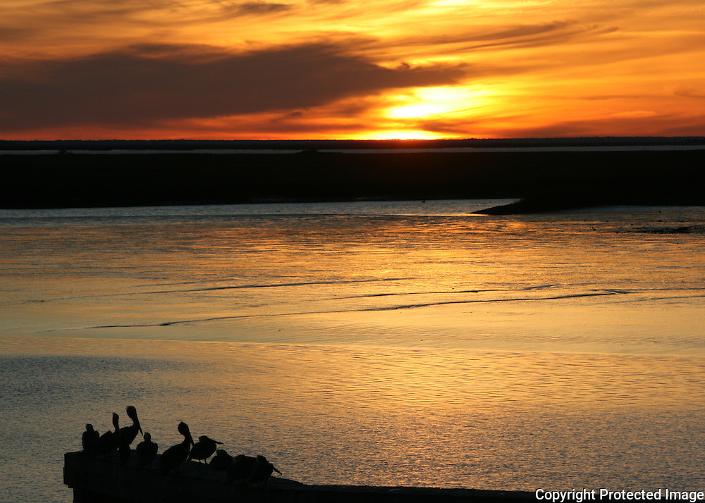 Sunset on the intracoastal side of Jekyll Island Georgia with silhouettes of resting pelicans.