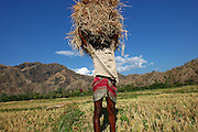 Farmer in Oecussi late afternoon. @ Martine Perret 10 September 2007