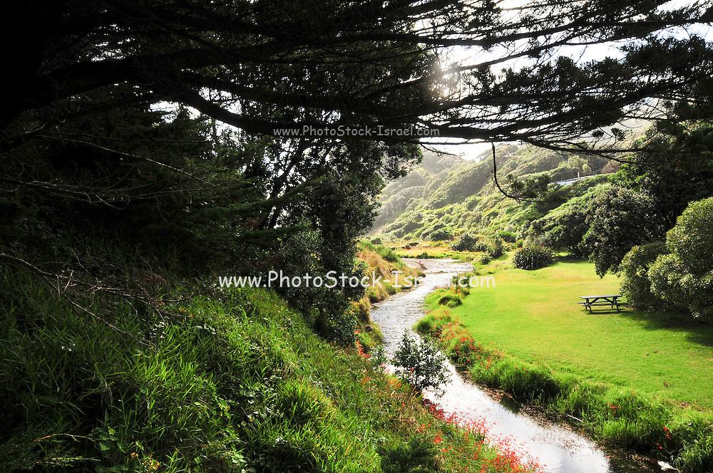 New Zealand, North Island, Auckland pohutukawa glade walk Waitakere Ranges Regional Park