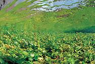 Underwater view of the Cabriel River. Molino de San Pedro. Sierra of Albarracin
