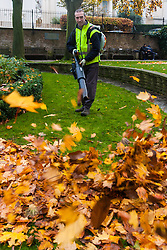 Paddington Basin, London, November 25th 2014. A worker uses a leafblower to sweep up the autumn leaves in Rembrandt gardens, Paddington.