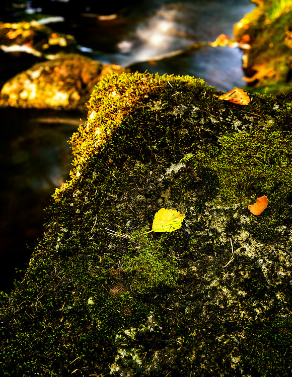 A fallen leaf at Dalsnuten with a small woodland stream in the background.
