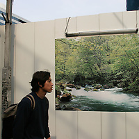 A picture depicting a forest and nature, on the boarding covering a building construction site, Yurakucho, Tokyo, Japan