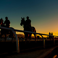Horses train for the Breeders' Cup at Santa Anita Park in Arcadia, CA on October 31, 2013. (Alex Evers/ Eclipse Sportswire)