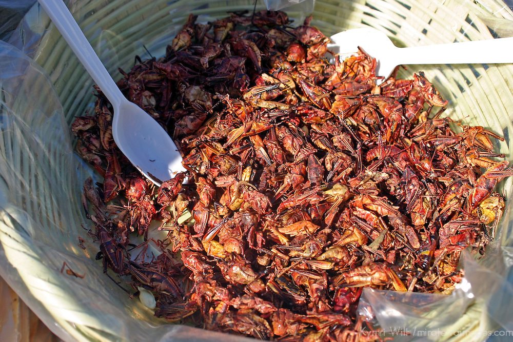 Americas, Mexico, Guanajuato, San Miguel de Allende.  Chapulines, or fried grasshoppers, are available in street markets of Guanajauto and other parts of Mexico as a protein-rich snack.