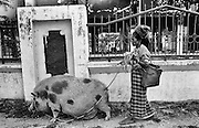 Gradually things start to return to normal in Dili East Timor  September 1999<br /> <br /> &copy;David Dare Parker/AsiaWorks Photography